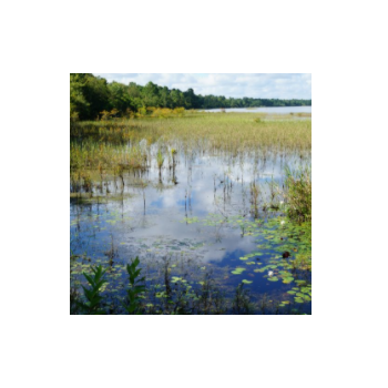 生态水环境修复