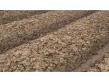 江苏启动土壤微塑料前瞻性监测研究