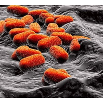HDR(氨氧化)红菌自养型脱氮技术