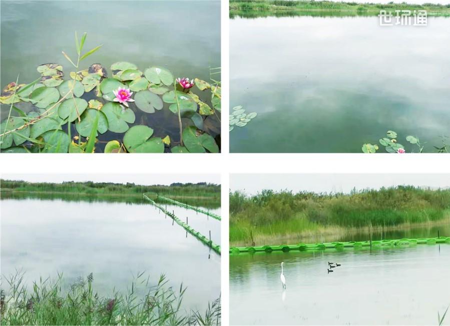 水环境生态修复